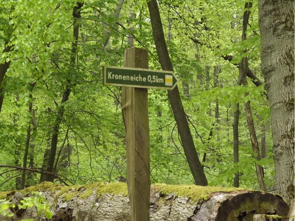 201705-buchenwald-chorin-02-markierung-kroneiche
