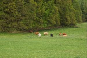 201705-buchenwald-chorin-01-kuhweide
