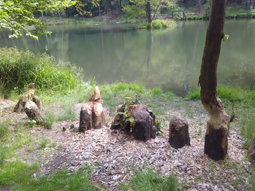 20170605-badfreienwalde-ahrendskehle (10)