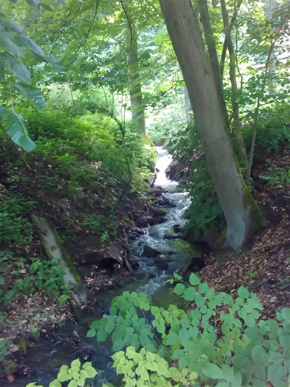 20170605-badfreienwalde-ahrendskehle (17)