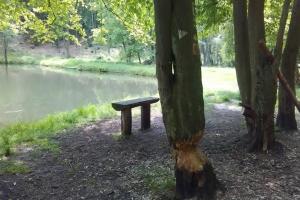 20170605-badfreienwalde-ahrendskehle (11)
