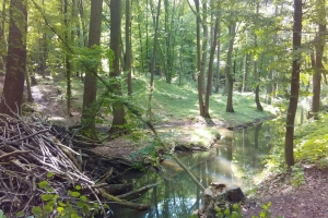 20170605-badfreienwalde-ahrendskehle (2)