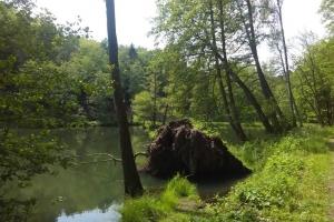 20170605-badfreienwalde-ahrendskehle (3)