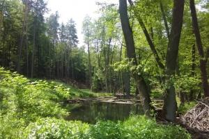20170605-badfreienwalde-ahrendskehle (4)