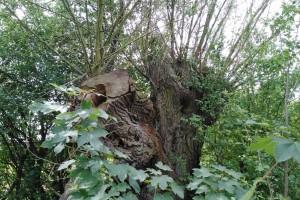 Radtour Ladeburg: Baumstumpf entlang Schmetzdorfer Straße