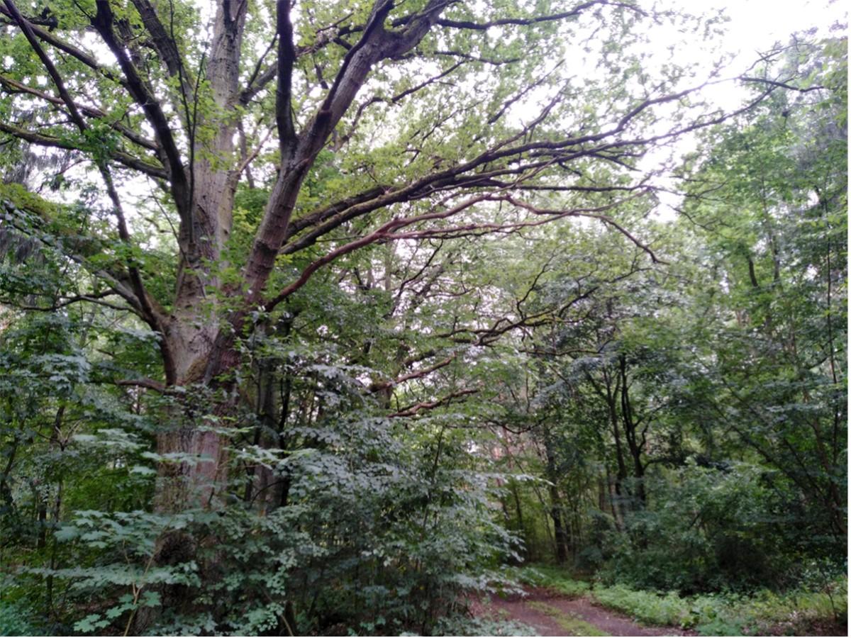 Wanderung Nähe Lager Koralle: Wunderschöner Baum