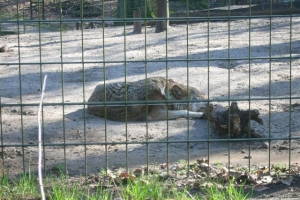 zoo_eberswalde_2007_3