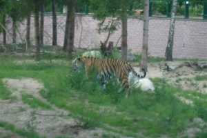zoo_eberswalde_2008_21