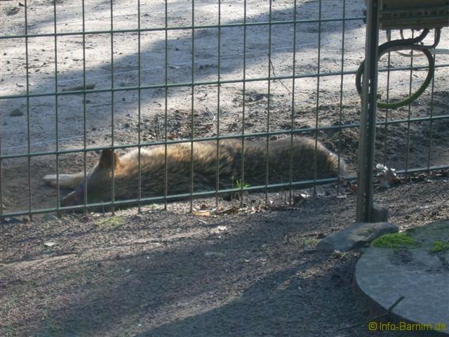 zoo_eberswalde_2007_4