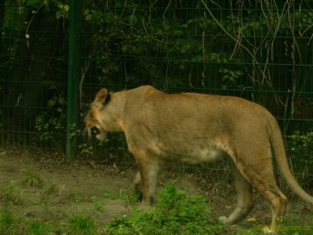 zoo_eberswalde_2008_06