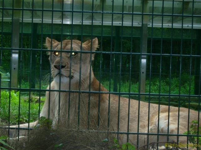 zoo_eberswalde_2008_07