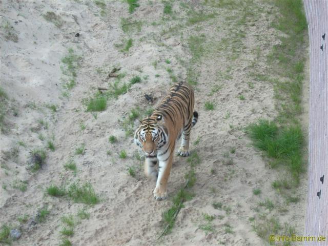 zoo_eberswalde_2008_19